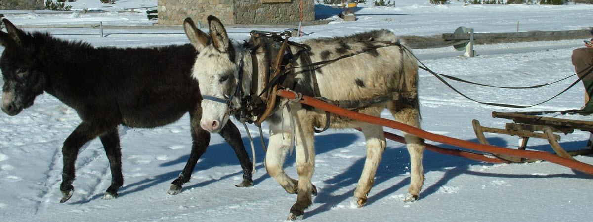 SilvanoSmersi_inverno2